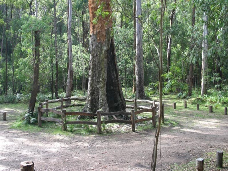 Six Mile Creek campground - ACT Tourism