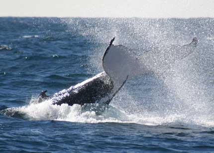 Whale Watching Sydney - ACT Tourism