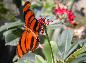 Butterfly Farm - ACT Tourism