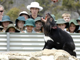 Tasmania Zoo - ACT Tourism