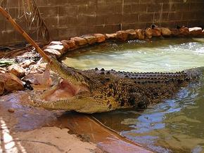 Wyndham Zoological Gardens And Crocodile Park - ACT Tourism