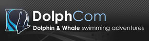 Dolphcom - Dolphin  Whale Swimming Adventures - ACT Tourism