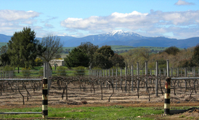Buller View Wines - ACT Tourism