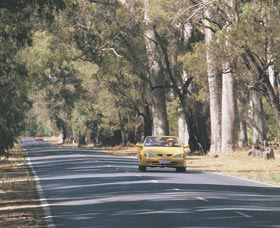 Ludlow Tuart Forest - ACT Tourism