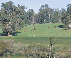 Scenic Drives - Bunbury Collie Donnybrook - ACT Tourism