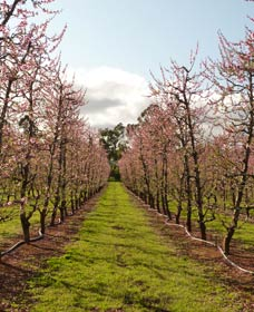 Raeburn Orchards - ACT Tourism