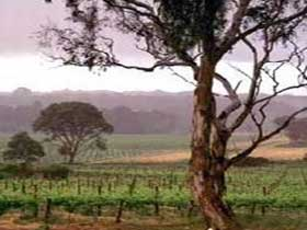 Yangarra Estate Vineyard - ACT Tourism