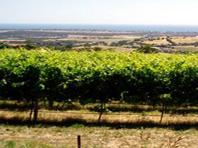 Braydun Hill Vineyard
