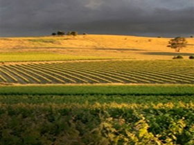 Kellermeister Wines - ACT Tourism