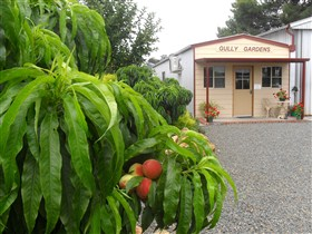 Gully Gardens - ACT Tourism
