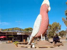 The Big Galah - ACT Tourism