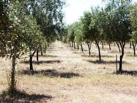 Talinga Grove Olive Oils - ACT Tourism