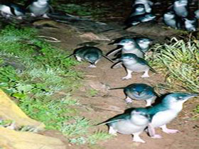 Penneshaw Penguin Centre - ACT Tourism
