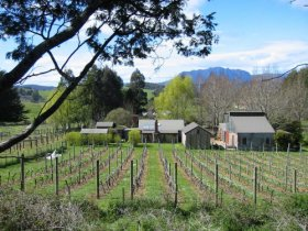 Wilmot Hills Vineyard - ACT Tourism