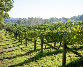 Surveyor's Hill Vineyards - ACT Tourism