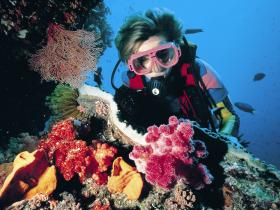 Cook Island Dive Site - ACT Tourism