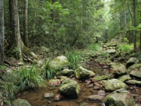 Amamoor State Forest - ACT Tourism