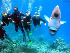 Jew Shoal Dive Site - ACT Tourism
