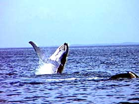 Whale Watching - ACT Tourism