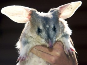Charleville - Bilby Experience - ACT Tourism