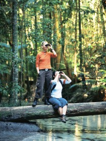 Birdwatching on the Fraser Coast - ACT Tourism