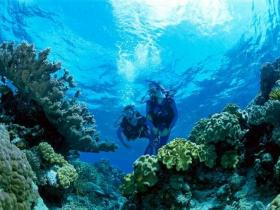 Coral Gardens Dive Site - ACT Tourism
