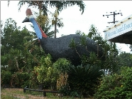 The Big Cassowary - ACT Tourism