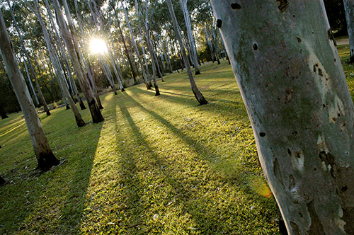 Tondoon Botanic Gardens - ACT Tourism
