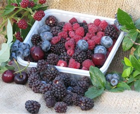 Bright Berry Farms - ACT Tourism