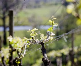Norton Estate Wines - ACT Tourism