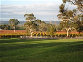 Top Note Vineyard - ACT Tourism