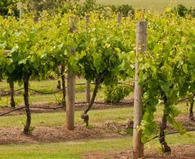Mt Coghill Vineyard - ACT Tourism