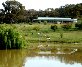 Clearview Alpacas - ACT Tourism