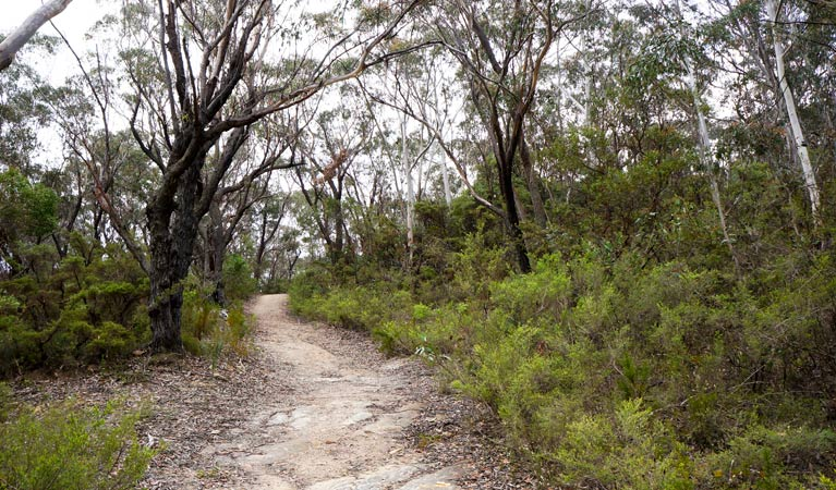 Six Foot walking track - ACT Tourism