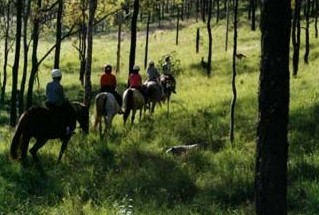 Hunter Valley Horse Riding and Adventures - ACT Tourism