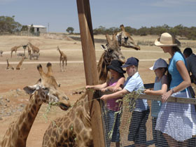 Monarto Open Range Zoo - ACT Tourism