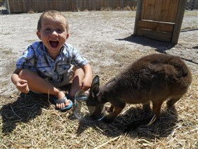 Animal Farm Goolwa - ACT Tourism