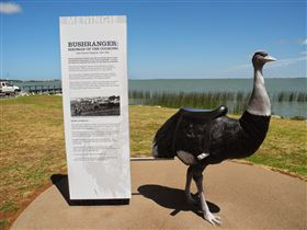 Birdman of the Coorong - ACT Tourism