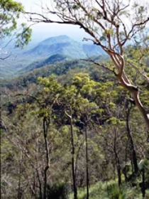 Crediton State Forest - ACT Tourism