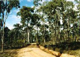 Paddys Ranges State Park - ACT Tourism