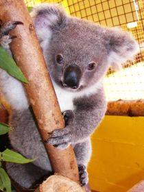 Cooberrie Park Wildlife Sanctuary - ACT Tourism