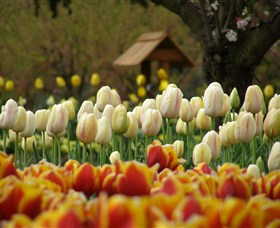 Tulip Top Gardens - ACT Tourism