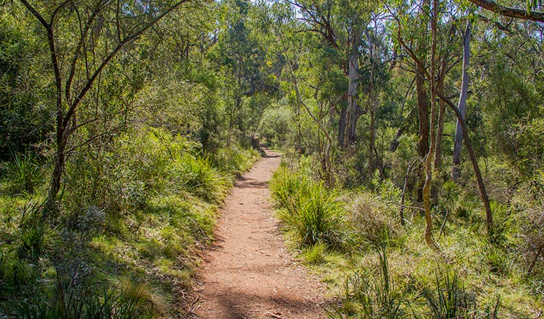 Mares Forest Creek walking track - ACT Tourism