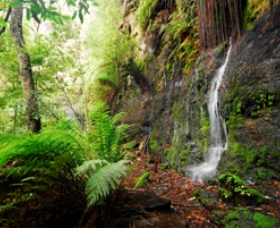 Fairy Bower Falls - ACT Tourism