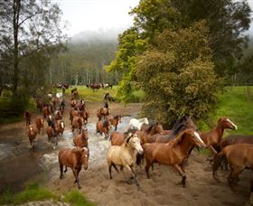 Glenworth Valley Horse Riding - ACT Tourism