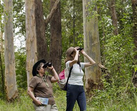 Chichester State Forest - ACT Tourism