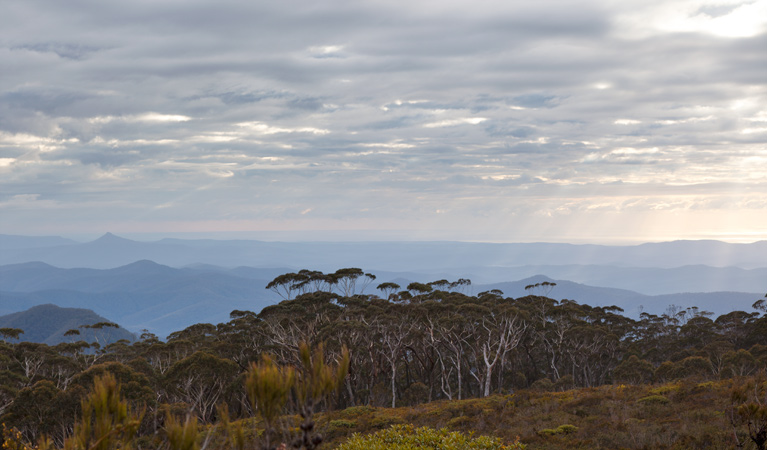 Mount Budawang trail - ACT Tourism