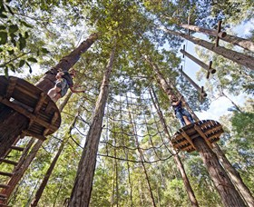 TreeTop Adventure Park Central Coast - ACT Tourism