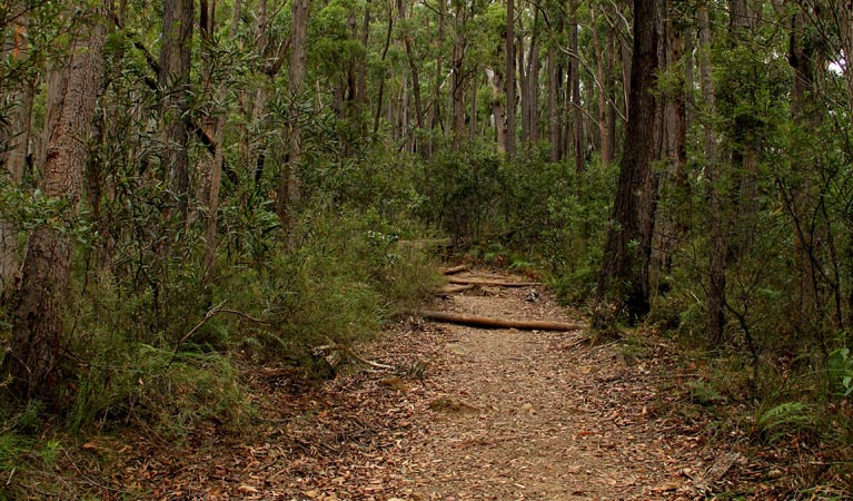 Pigeon House Mountain Didthul walking track - ACT Tourism
