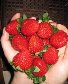 The Strawberry Farm - ACT Tourism